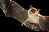 Be kind to bats and leave rescues to the experts